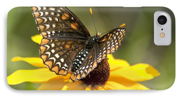 Baltimore Checkerspot And Black-eyed Susan IPhone Case