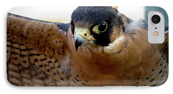 Barbary Falcon Wings Stretched IPhone Case
