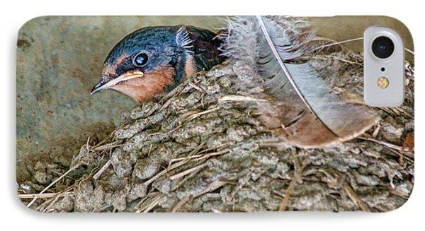 Barn Swallow Fledgling - Baby Bird In Nest IPhone Case