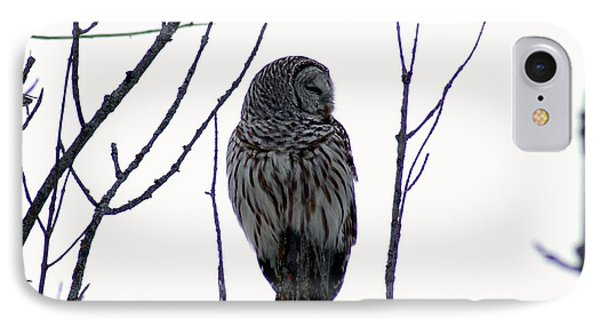 Barred Owl 3  IPhone Case
