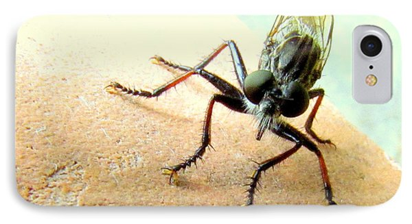 Bearded Robber Fly IPhone Case