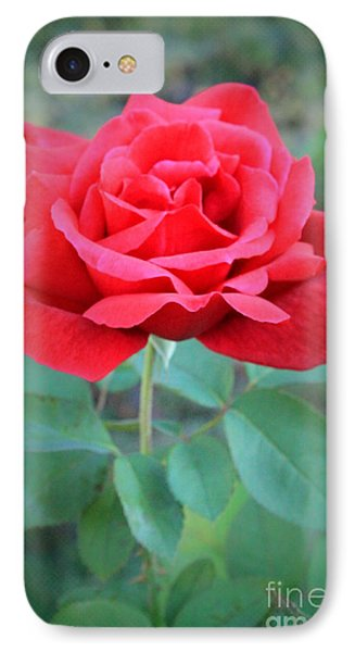 Beautiful Morning Rose  IPhone Case