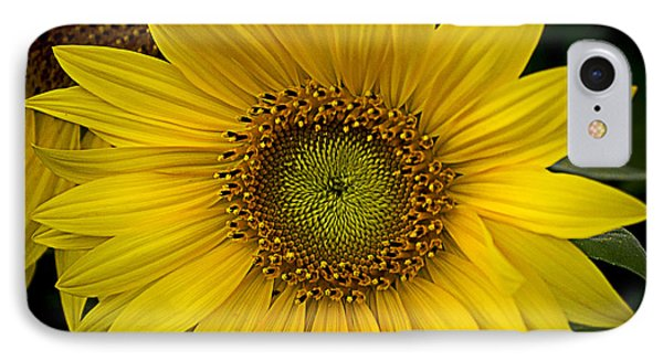 Beautiful Sunflower IPhone Case