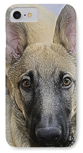 Belgian Malinois Puppy Portrait IPhone Case
