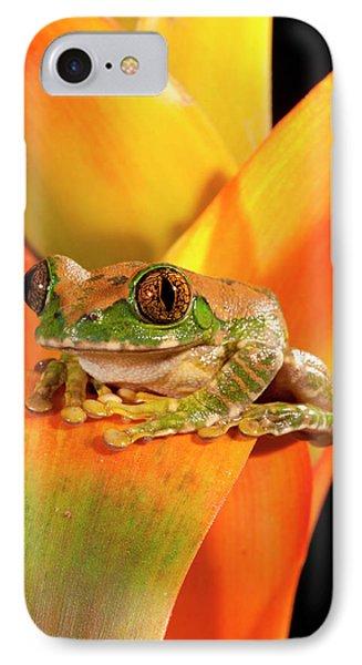 Big Eye Treefrog, Leptopelis IPhone Case