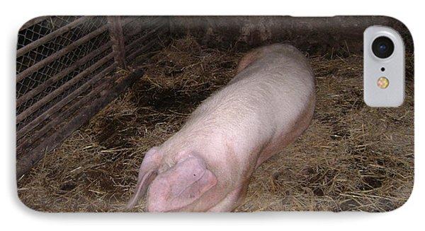 Big Pig IPhone Case