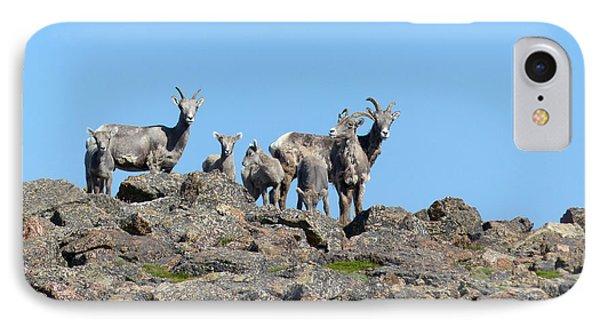 Bighorn Sheep IPhone Case