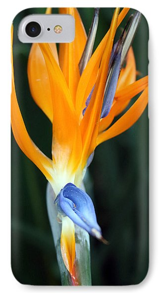 Bird Of Paradise Study 1 IPhone Case