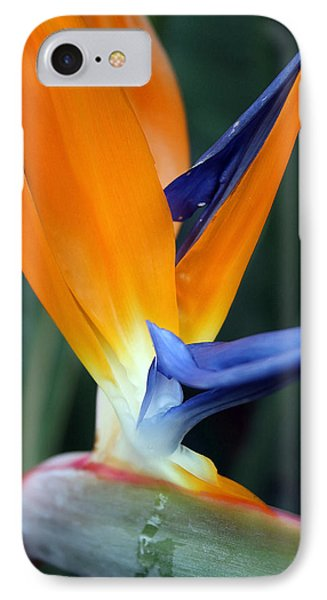 Bird Of Paradise Study 2 IPhone Case