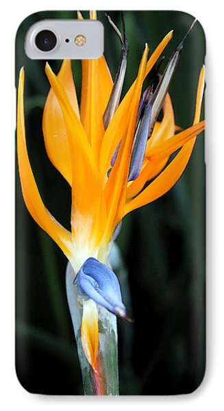 Bird Of Paradise Study 3 IPhone Case