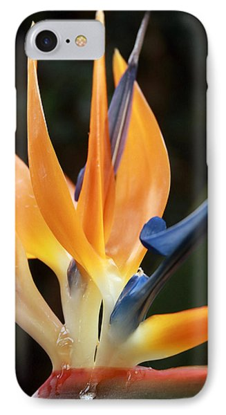 Bird Of Paradise Study 5 IPhone Case