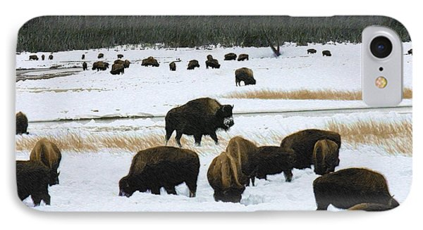 Bison Cows Browsing IPhone Case