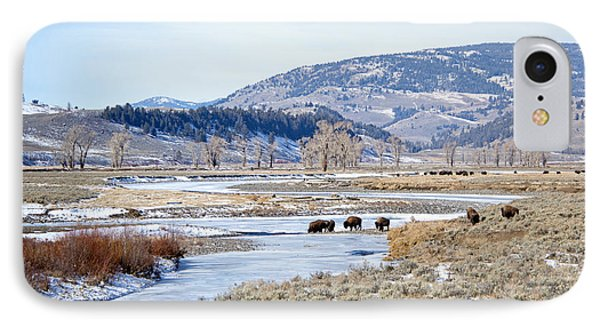 Bison In Lamar Valley IPhone Case