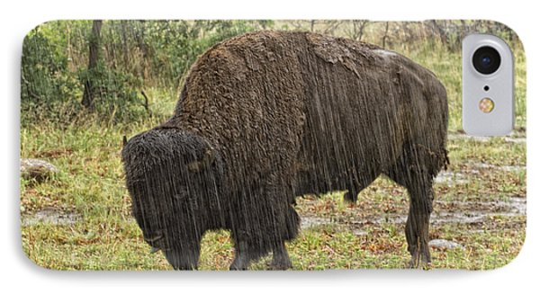 Bison In Rain IPhone Case