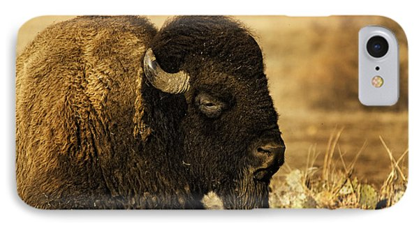 Bison In The Wichitas IPhone Case