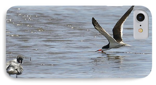 Black Skimmer Looking For Lunch IPhone Case