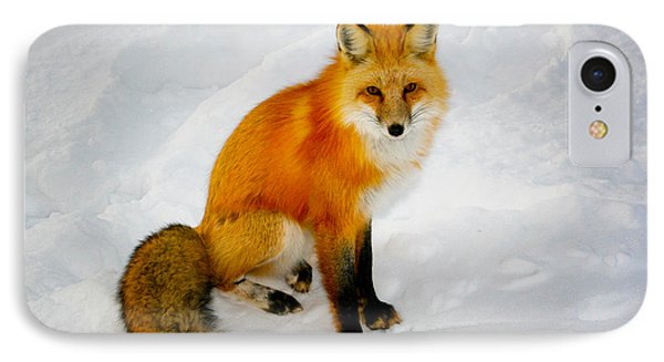 Black Socks Fox IPhone Case