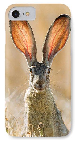 Black-tailed Hare Davis California IPhone Case