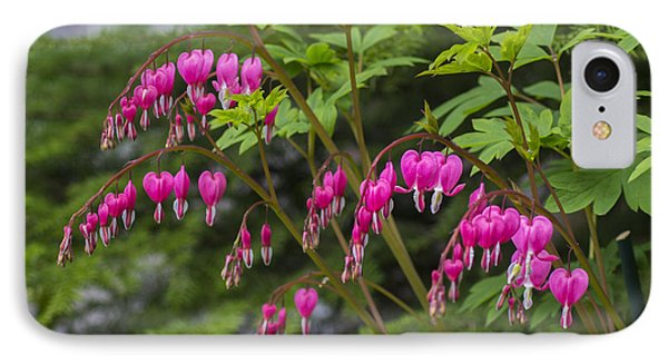 Bleeding Hearts IPhone Case