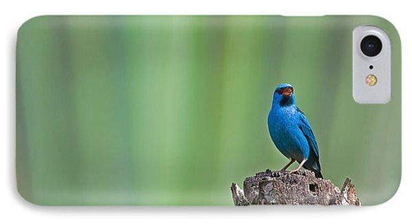 Blue Dacnis IPhone Case