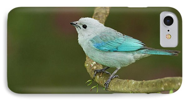 Belize iPhone 8 Case - Blue-grey Tanager (thraupis Episcopus by William Sutton
