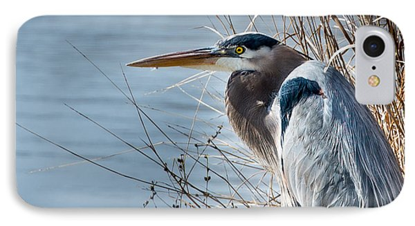 Blue Heron At Pond IPhone Case