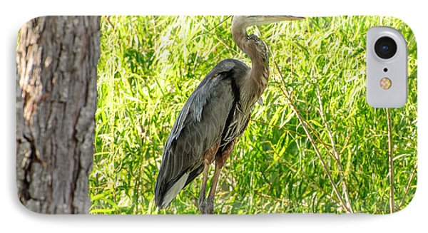 Blue Heron At Rest IPhone Case