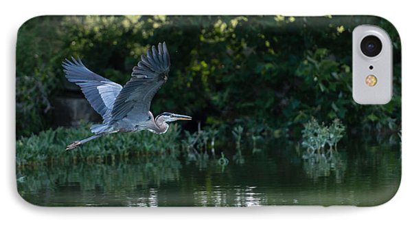 Blue Heron Take-off IPhone Case
