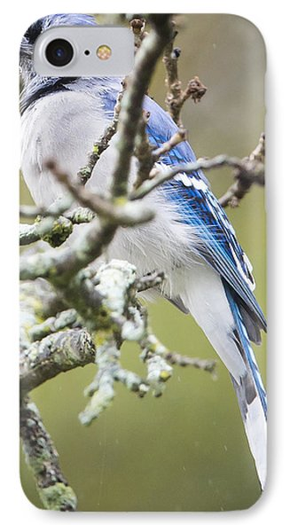 Blue Jay In The Rain IPhone Case