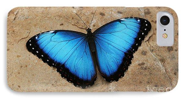 Blue Morpho #2 IPhone Case