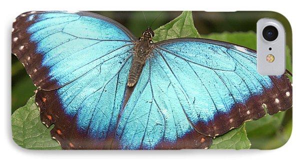 Belize iPhone 8 Case - Blue Morpho (morpho by William Sutton