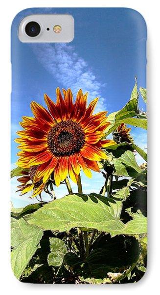 Blue Sky And Sun Flower IPhone Case