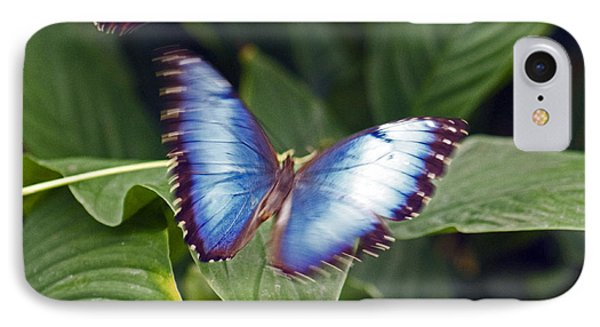 Blue Wings IPhone Case