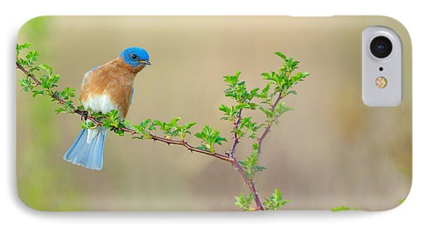 Bluebird Breeze IPhone Case