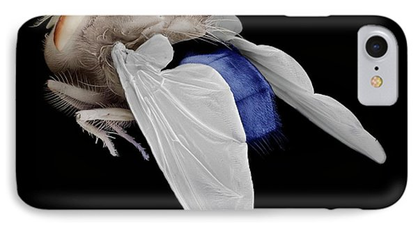 Bluebottle Fly IPhone Case