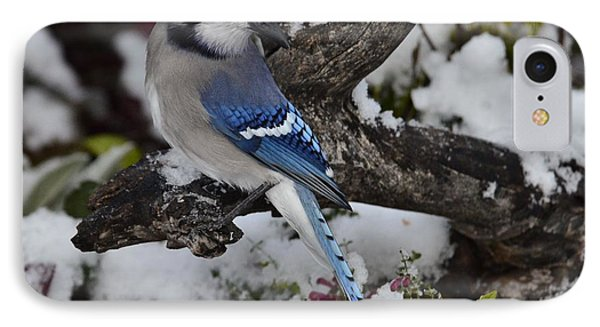 Bluejay  Snow    P10 IPhone Case