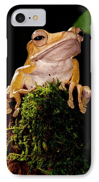 Borneo Eared Frog, Polypedates IPhone Case