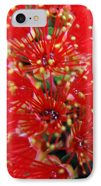 Bottle Brush Bloom IPhone Case
