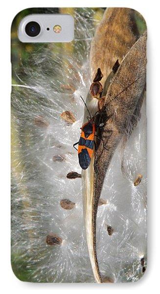 Boxelder On Butterfly Milkweed 2 IPhone Case