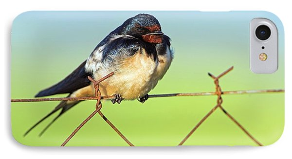 Bran Swallow On A Fence IPhone Case