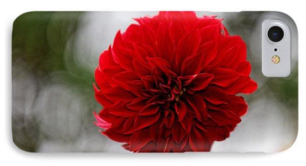 Bright Red Dahlia IPhone Case