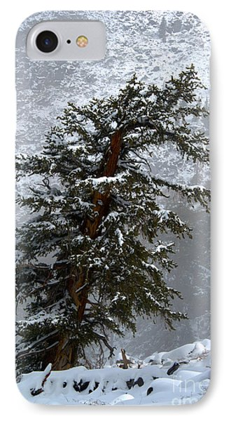 Bristlecone Pine In Snow IPhone Case