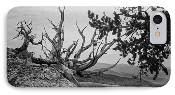 Bristlecone With A View IPhone Case