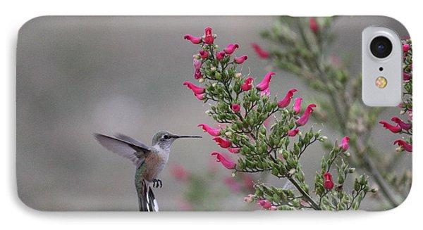 Broad Tail Hummingbird IPhone Case