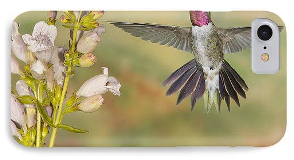 Broad Tailed Hummingbird 2 IPhone Case