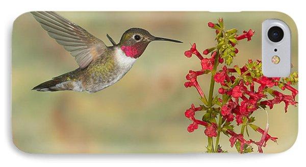 Broad-tailed Hummingbird 5 IPhone Case