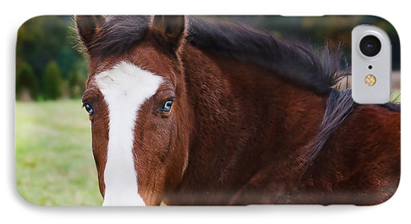 Brown Horse-blue Eyes IPhone Case