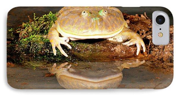 Budgett's Frog, Lepidobatrachus Asper IPhone Case