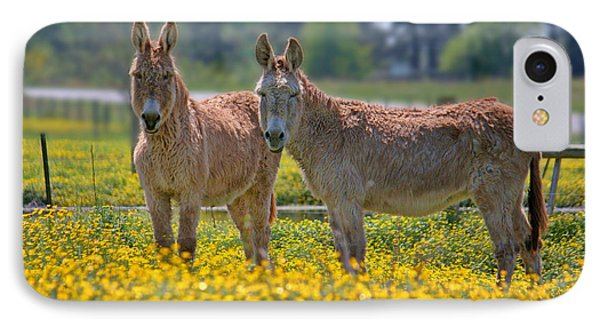 Burros In The Buttercups IPhone Case