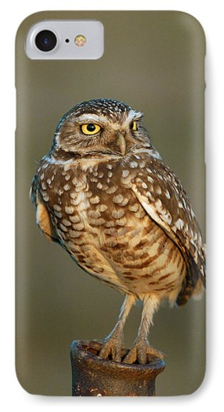 Burrowing Owl At Sunset IPhone Case